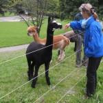 Kleiner als Lamas
