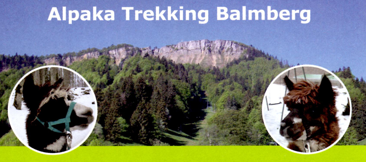 Alpakatrekking Jura